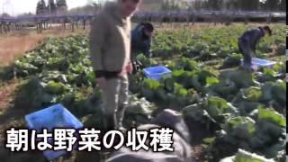 大野村農園のホームページはこちらです→http://oonomuranouen.wix.com/s...