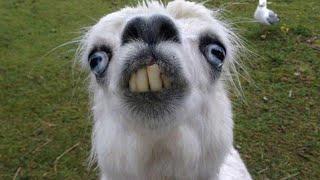 Những con vật hài hước dễ thương và thông minh nhất thế giới