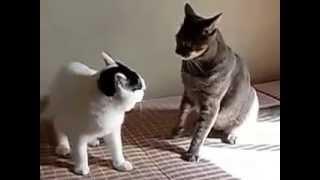 朝陽を浴びながらけんかする猫たち.
