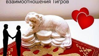 Взаимоотношения рожденных в год Тигра