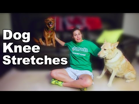 Dog Knee Stretches After CCL Surgery - Ask Doctor Jo