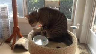 funny animals| funny cats|hungry cats are so funny| don't miss