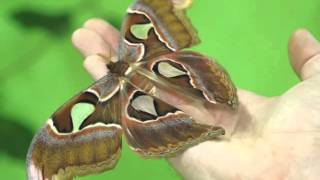 В Серове открылась выставка живых тропических бабочек!