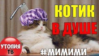 CAT VIDEOS: КОТИК В ДУШЕ   CAT IN SHOWER