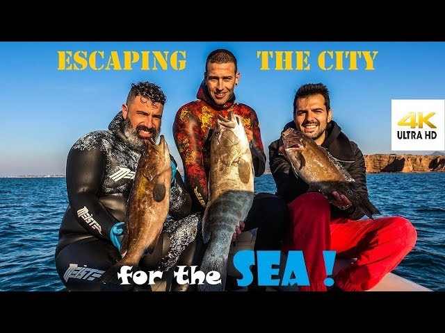 Spearfishing | ESCAPING the CITY for the SEA - CATCH CLEAN FILLET - White Grouper [4K] ✅