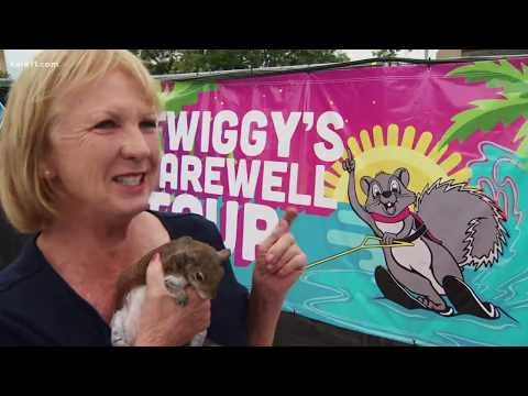 Land of 10,000 Stories: Twiggy the water-skiing squirrel retires after Mpls. show