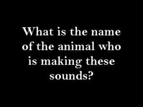 Audio Pop Quiz: Name that animal!