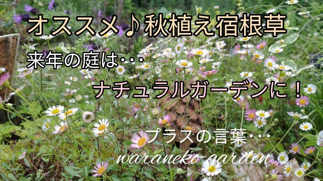 オススメ秋植え宿根草 来年の庭はナチュラルガーデンに・・・\プラスの言葉\Perennials I want you to plant in the fall