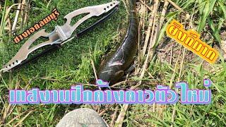 #ช่างเอกลพบุรี#ยิงปลาช่อน  เทสปีกค้างคาวตัวใหม่ยิงปลา