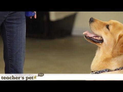 Taking Treats Gently | Teacher's Pet With Victoria Stilwell