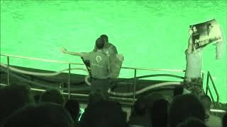Animal welfare activists interrupt dolphin show in the Dolphinarium Harderwijk