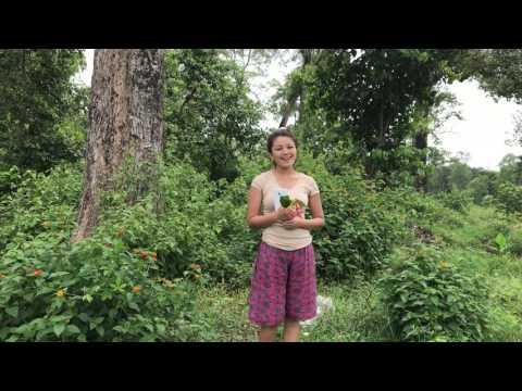 Banma Fulyo Fulai phool  बनमा फुल्यो फुलै फुल दिपा तामाङ भन्दै छन झापा दमकमा