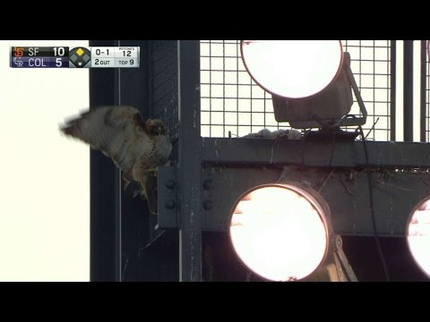 SF@COL: Baby hawks enjoy the game at Coors Field
