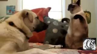 Кошки против Собаки Кто Кого Видео Приколы Ищейка 9 серия