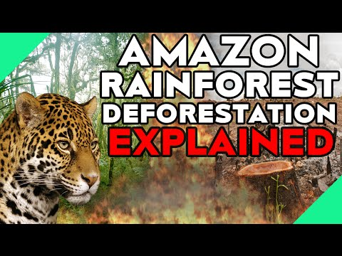 Amazon Rainforest Deforestation Explained