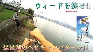 琵琶湖の定番♫ウィードを探せ‼︎
