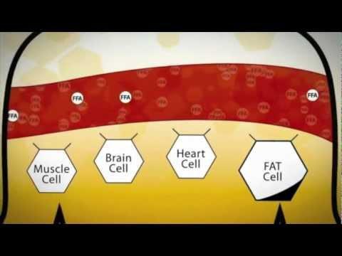 The Science of Bios Life Slim - English