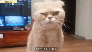 스코티쉬폴드 고양이 눈병(눈꼽, 눈부음) 병원에 가다.…