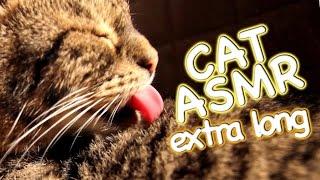 ASMR Cat - Grooming #8