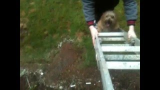 Step by step dog training on a ladder