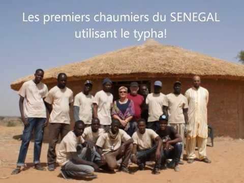 Toits de chaume en typha au SENEGAL
