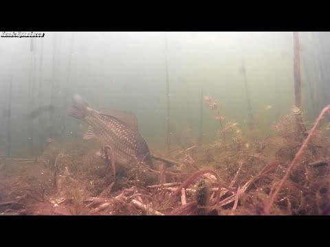 Снимая подводный мир обнаружил сеть.