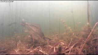 Снимая подводный мир обнаружил сеть