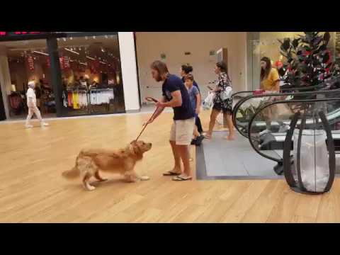 エスカレーターが怖い犬、飼い主に抱っこされる