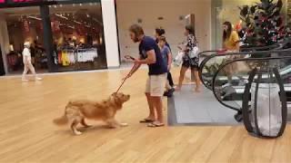 こわい。こわい.。エスカレーター怖い。エスカレーターに尻込みする犬、飼い主さんに抱っこしてもらう。