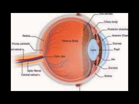 Eye Diagram Quiz Game House Wiring Diagram Symbols