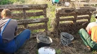 Hodowla ślimaków - zbiory ślimaka