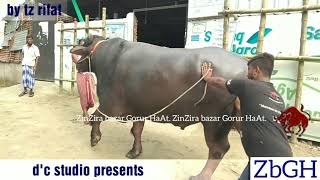 356 | Qurbani 2018 | Murrah Buffalo | Live Weight 1050 kg | Sadeeq Agro | ZbGH 2018