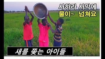 아프리카에서 새를 쫒는 아이들. 사하라 사막에서 물이 넘쳐요~~** #아프리카농업#세네갈벼농사