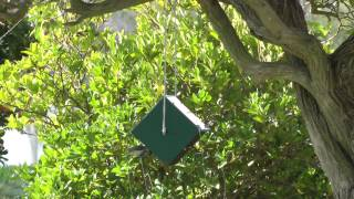 House Sparrow Resistant Bird Feeder 2014