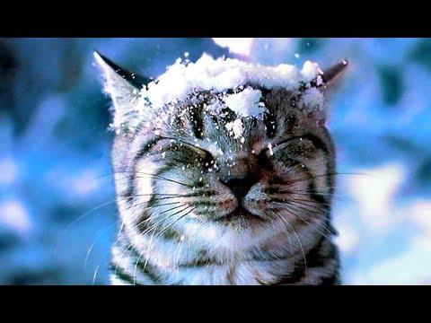 Ой летят снежинки - Новогодние песни для детей