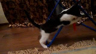Черно-белый котенок ищет свой дом, отдам котенка, котенок в добрые руки