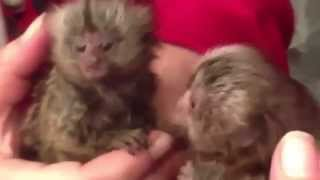 Funny Animals vs Mirrors Compilation 2015 - Funny Videos Compilation 2015