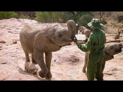 Unique Partnership to Save Baby Elephants