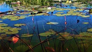 Рыбалка на поплавок в подводном лесу! Поклевки крупным планом!