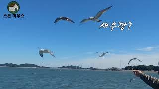 [일상] 갈매기와 함께하는 영흥도 유람선