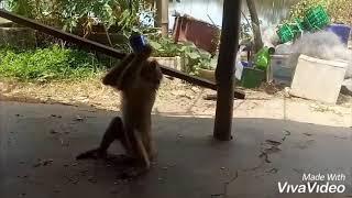 Lồng tiếng động vật giải trí