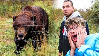 FACE TO FACE WITH GRIZZLY BEARS! w/ Jc Caylen, Ricky Dillon, Andrea Russett & Corey Scherer!