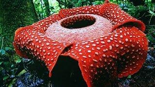 Самые необычные и удивительные растения Земли.