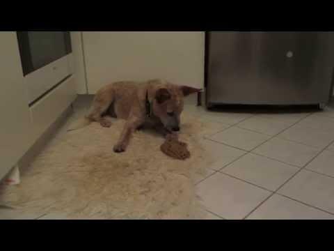 Wymioty u psa: co zrobić kiedy Twój pies wymiotuje?