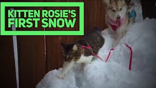 Kitten Rosie's First Snow with Husky Pack thumbnail