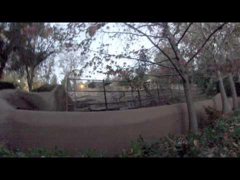 San Diego Zoo- zebras! thumbnail