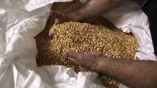 E' la terra che ce lo chiede - Azienda Agricola Salera, la passione per la terra.