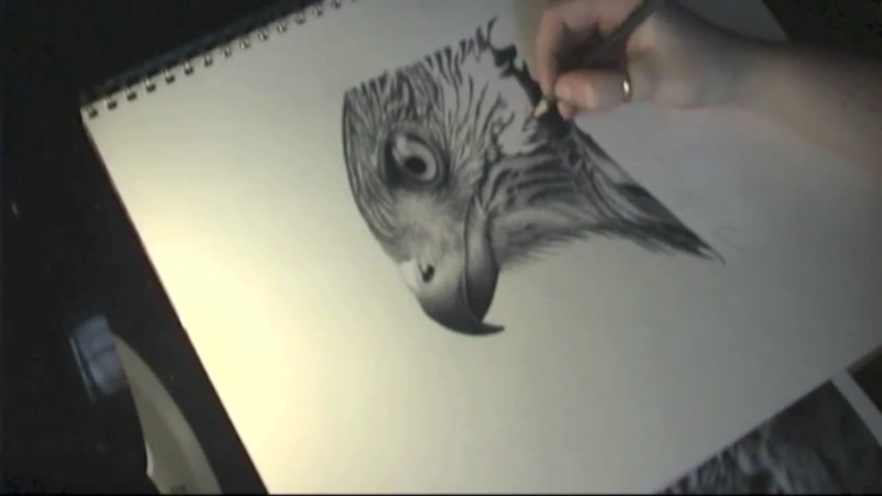 How To Draw A Realistic Bird - Cooper's Hawk Speed Drawing ...