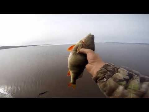 ловля окуня на реке ангаре
