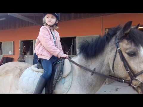 vlog cour d  équitation halley